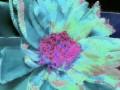 Flower Service 062g