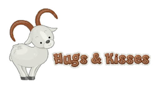 Hugs & Kisses - BighornSheep