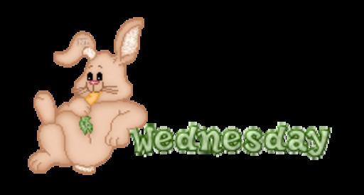 DOTW Wednesday - BunnyWithCarrot
