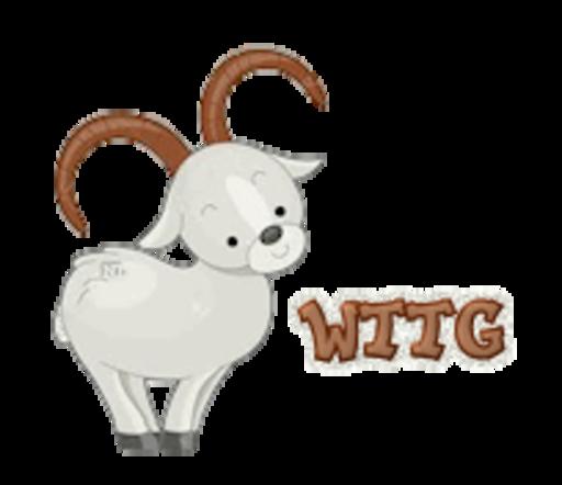 WTTG - BighornSheep