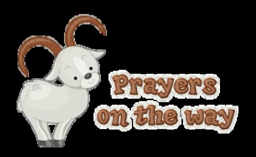 Prayers on the way - BighornSheep