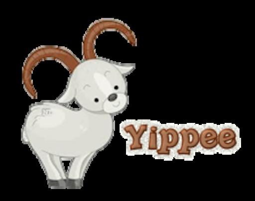 Yippee - BighornSheep