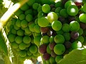 Dievole Winery