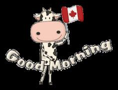 Good Morning - CanadaDayCow