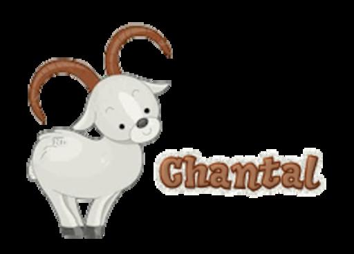 Chantal - BighornSheep