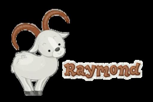 Raymond - BighornSheep