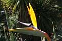 Melbourne Botanical Garden (10)