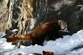 070216 Natl Zoo245