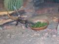 The Toledo Zoo 079
