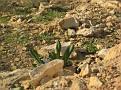 11 Judean Desert (34)
