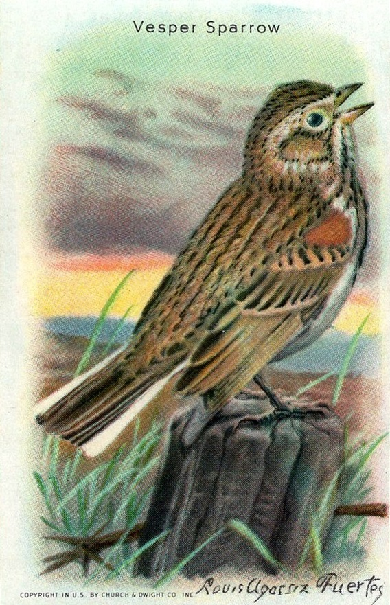 1938 Useful Birds of America Series 10 #06 (1)
