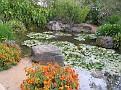 LA Arboretum - Tallac Knoll2