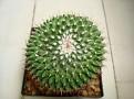 Mammillaria sartorii