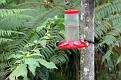 203-kolibry img 6236