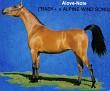 ALOVE-NOTE++ #163187 (*Bask++ x Alpine Wind Song, by Comar Bay Beau) 1977 bay mare bred by Lasma Arabian Stud
