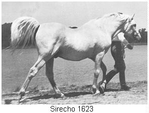 Sirecho, by *Nasr out of *Exochorda