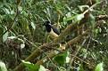 Bird, Iguazu
