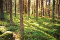 Forrest in Finland