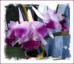 oh my, orchids - what a pleasant surprise