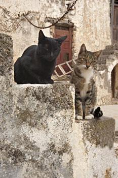 140-Preveli-koty.jpg