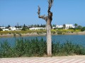 Punic Port