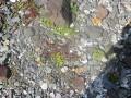 Ferðágúst2004 079