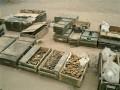 USA Airborne 101 in Iraq 099