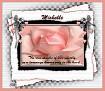 Michelle-gailz-pink rose