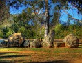 Cowra Japanese Gardens Rock Farm 001