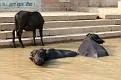 075-waranasi ghaty w poludnie-img 2110