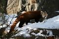 070216 Natl Zoo243