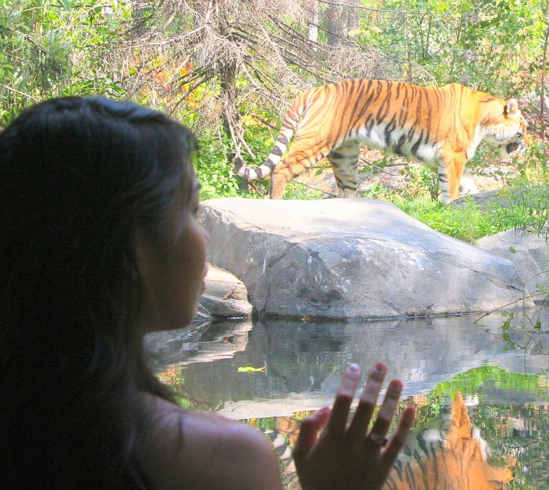 The Tiger Exhibit