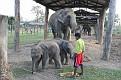 112-chitwan ferma sloni-img 3384