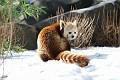 070216 Natl Zoo226